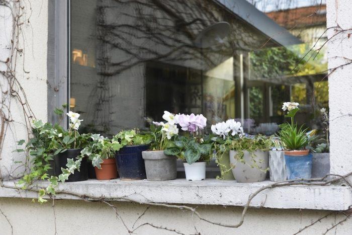 窓辺には1年自由花の鉢植えを欠かさない。