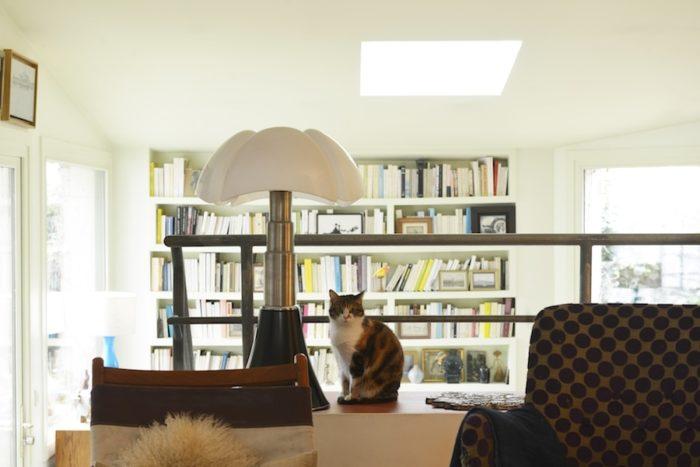 猫のフィキュスさん。立派な体躯に似合わず怖がり屋さん。