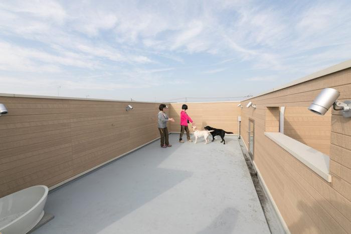 ドッグランになっているルーフテラス。壁に囲まれているため安全で、犬たちが思いっきり遊べる。手前にはプール兼洗い場も。