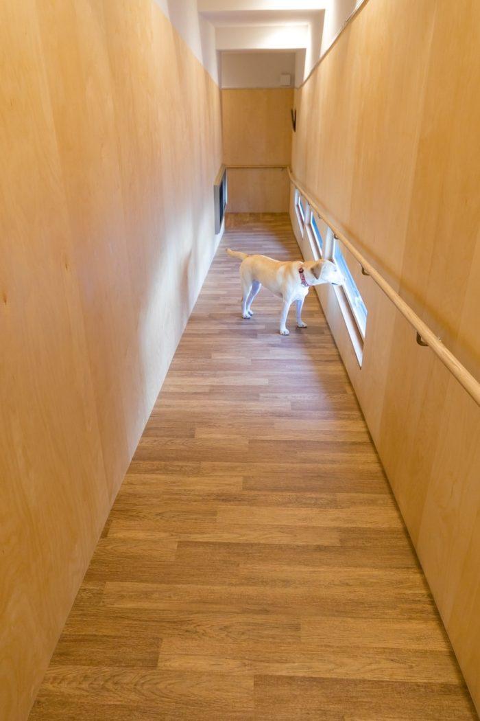 滑りにくいように床材を横に貼った広めのスロープ。犬の目線の高さに設置した窓から外を眺めるドレミちゃん(1歳・メス)。彼女はこの家に越してから引き取られたため、階段を知らないそう。