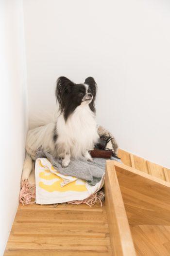 """1階と2階の様子がわかるこの位置は犬たちに人気。 寒い時期は、あいちゃん自らブランケットを持ってくるのだそう。「""""あい(愛)の巣""""と呼んでいます(笑)」(ご主人)"""