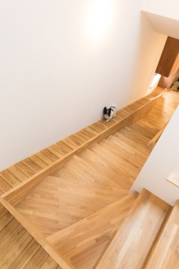 階段の下が玄関で、右奥のリビングへと続く。リビングの引き戸は開けっ放しで、常に犬たちが1階、2階を自由に行き来できるようになっている