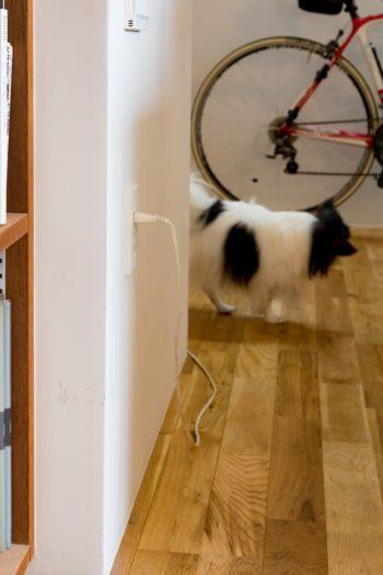 犬がいたずらしないように、コンセントの位置を通常より高めに設定した。