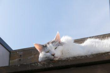 屋上に上がる階段には先客が。気持ちよさそうにまどろんでいた。