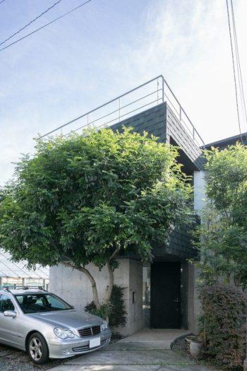 竣工時は小さな苗木だったシマトリネコが、8年が経ち、屋根にも届く高さまで成長。