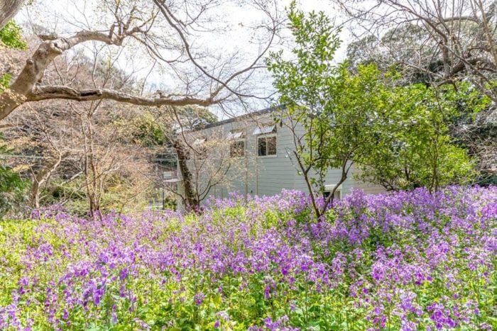 西側の斜面の上から見る。手前の紫の花はショカッサイ。奥さんは家の周囲に自然に広がって咲く様を見てとても癒されるという。