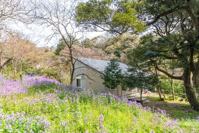 北側は旧坂井家を訪れる人がいるため、プライベートな庭は南側に設けた。外壁はグレーから途中でベージュに色を切り替えている。