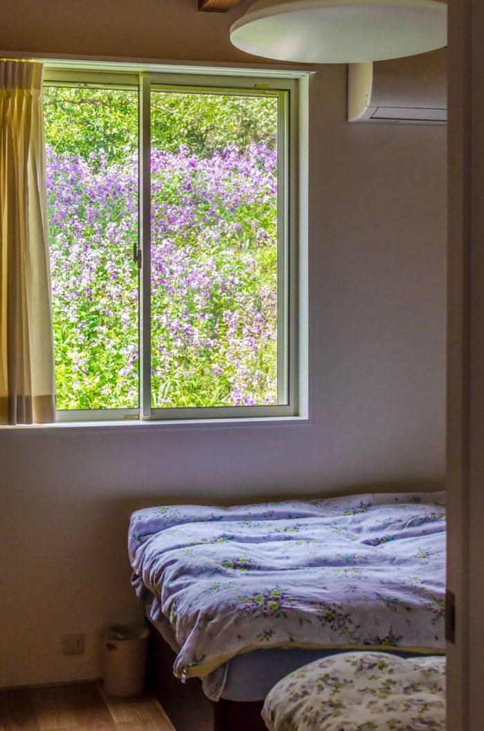寝室からもショカッサイのきれいな紫色の花を楽しむことができる。