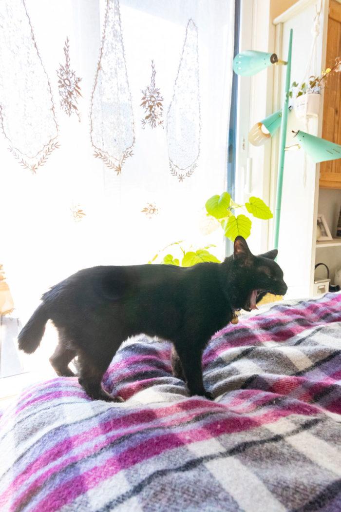 日だまりでお昼寝していた黒猫のタンゴちゃん。「2階のベランダは出入り自由にしています」
