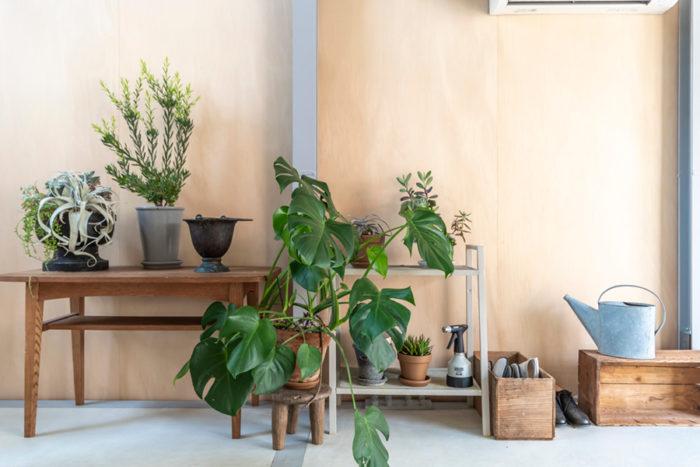 1階の壁際に置かれた家具や緑などがチャーミングな場所をつくり出している。背景のシナ合板の色合いとの相性もいい。