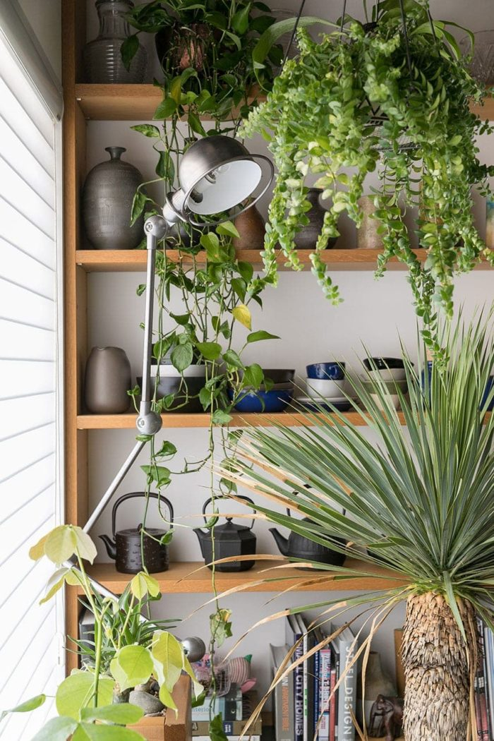 お気に入りのものを飾っている棚とたっぷりの緑の組み合わせが美しい。「ここに越す前は植物には興味がなかったのですが、いまはすっかりハマっています(笑)」