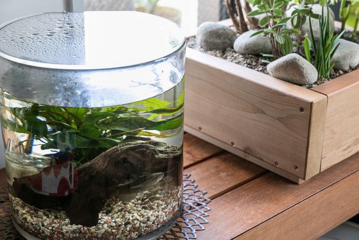 水槽の中にはペットのナマズくん。「空腹の時に餌をねだる姿が可愛いです」