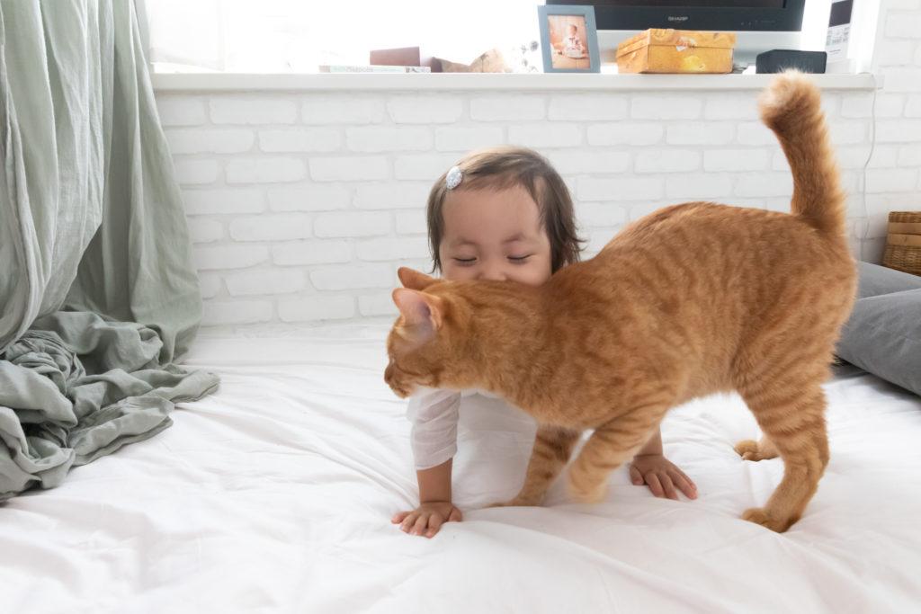 長女・なつめちゃんと猫の小麦。なつめちゃん側のスペースはロマンチックに。