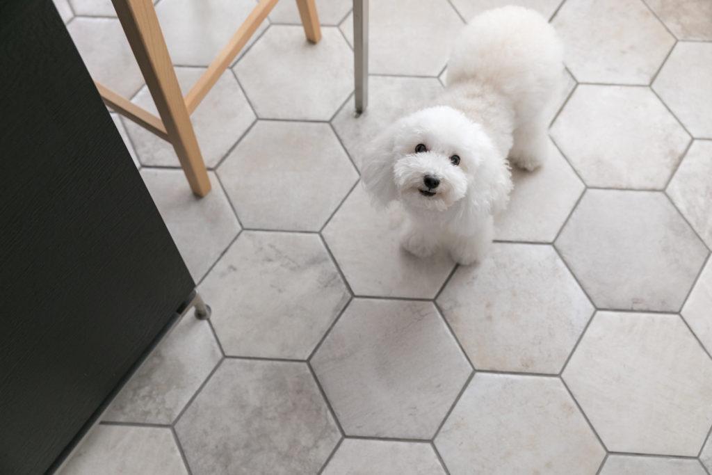 人懐こくてかわいい4歳の愛犬ウールちゃん。