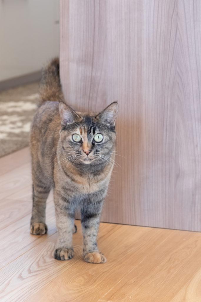 現在飼っているモモちゃん(5歳、メス)。もう一匹の黒猫のハナちゃん(6歳、メス)はシャイな性格で一瞬しかお目にかかれなかった。