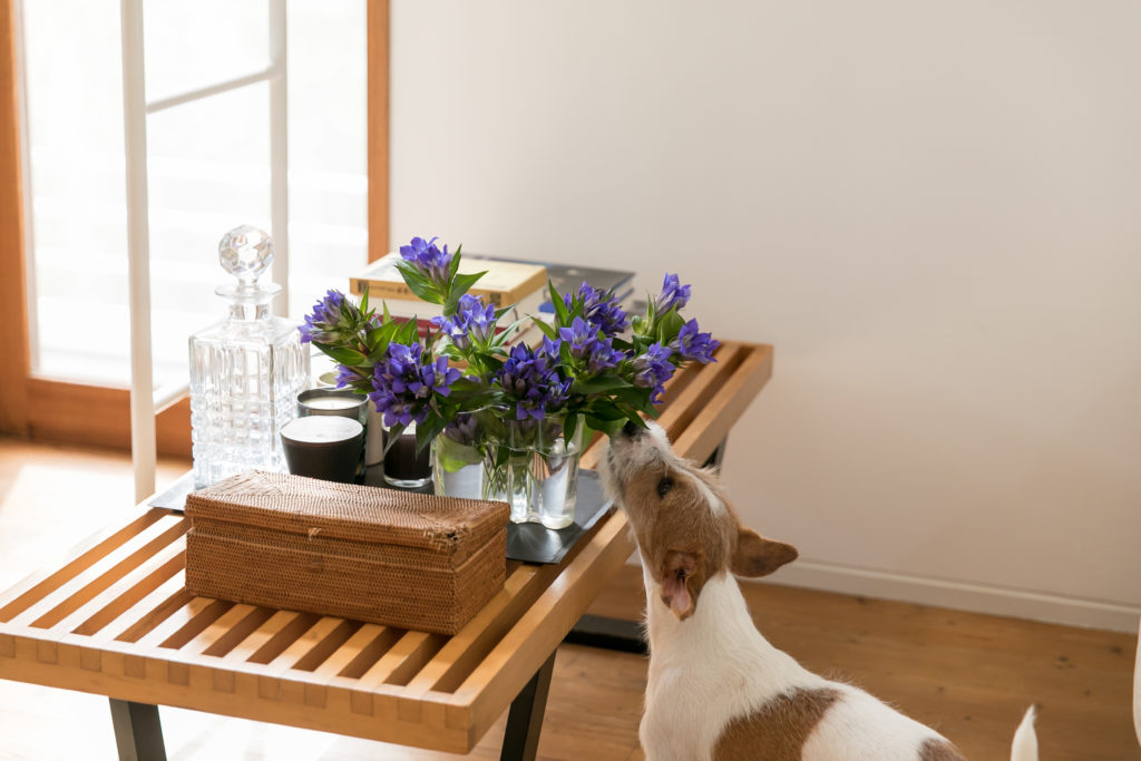 ローテーブルとして使っているネルソンベンチには花やキャンドルを飾り、インテリアの一部に。花の匂いを嗅いでいるのは、好奇心旺盛な4カ月(取材時)のロンちゃん(男の子)。