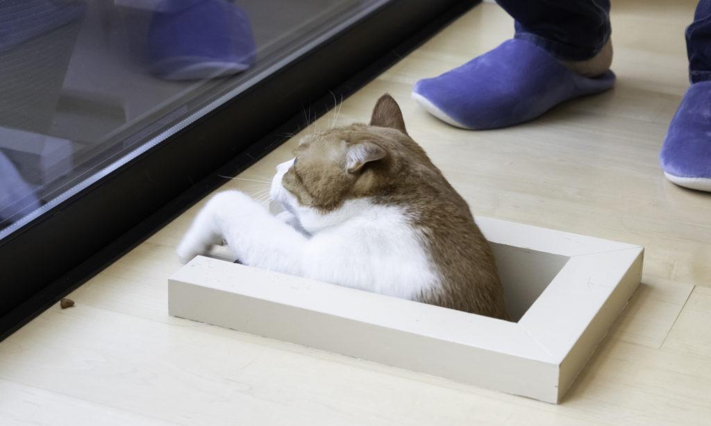 1階から猫用階段を昇り、春太くんが登場。リビングで寛いでいるときに、突然猫が床から現れる光景はユニーク。