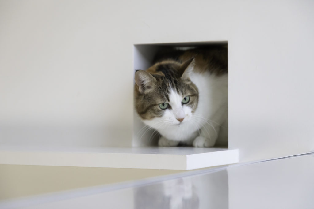 3階のキャットウォークの到達点には、猫が通れるトンネルを用意。唯一の女の子・ももちゃんが可愛らしいお顔をのぞかせていた。ぞいていた。