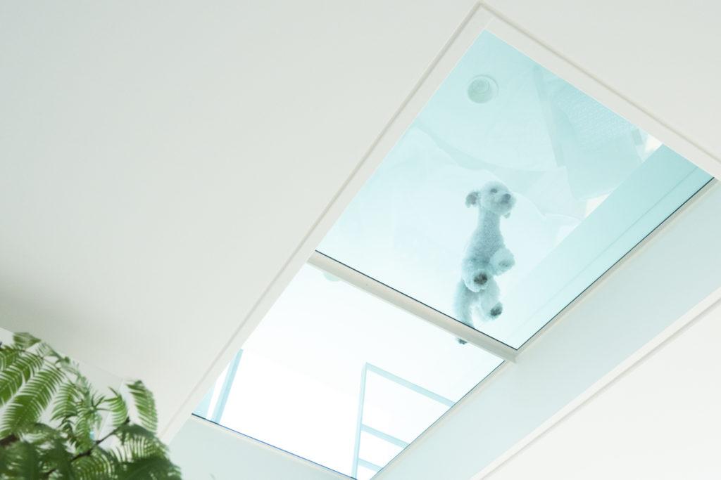 子ども部屋のロフトの床にもガラスを採用。空からの光が降りてくる。