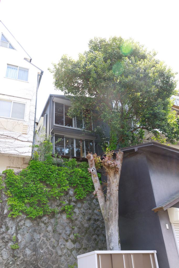 約7mの擁壁の上に建つ。崖地という難条件を除いてはベストな場所だった。M邸のモチノキが元気に伸びている。