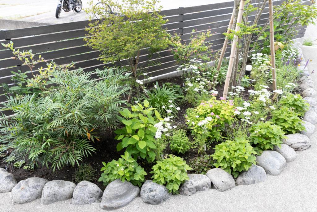 植栽スペースのひとつ。ユーカリやあじさいなど自ら加えていった。種から植えたオルラヤ(白い花)がきれいに咲いている