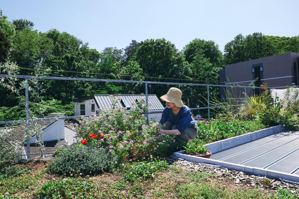 屋上のガーデンで。「ウォーター・フィッシュ」柳原久子さん。観賞用のネイティブプランツやハーブ、野菜など多種類を育てている。