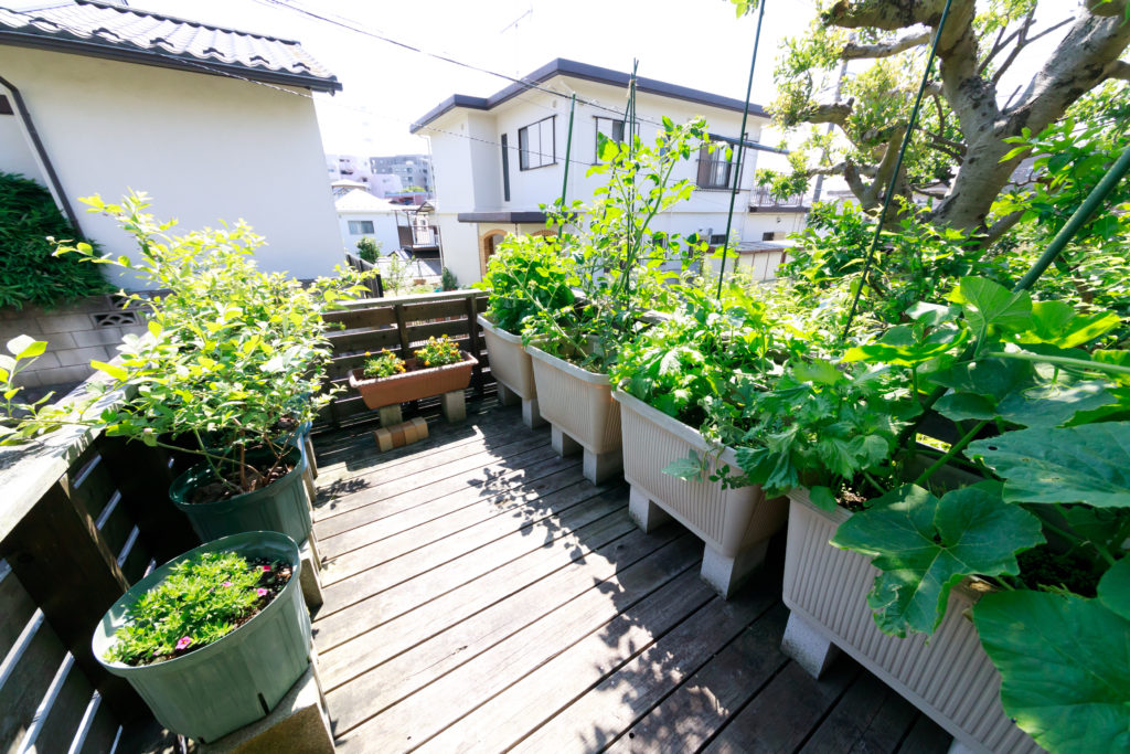 駐車スペースの上に位置し、中庭に隣接した菜園デッキ。しそやきゅうり、カボチャ、トマトなど季節の野菜や果物を育てている。「植えるのは妻で、使うのは私です(笑)」。