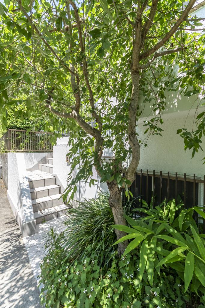 家の前の小径。緑いっぱいの階段を登って辿り着く。