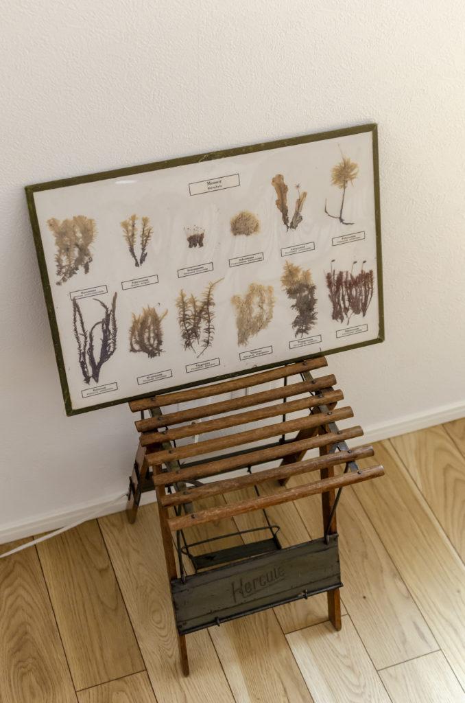 スウェーデンの小学校で使っていたMOSS=苔の教材。蚤の市で発掘。