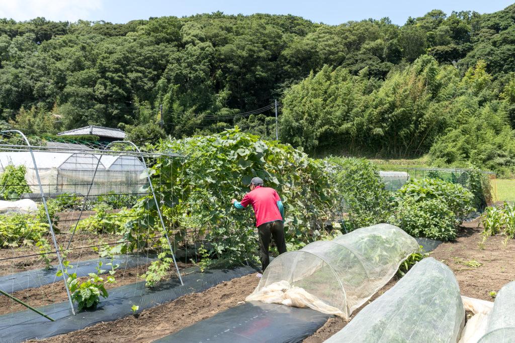 西田邸から、ほど近い場所にあるご主人の農園。