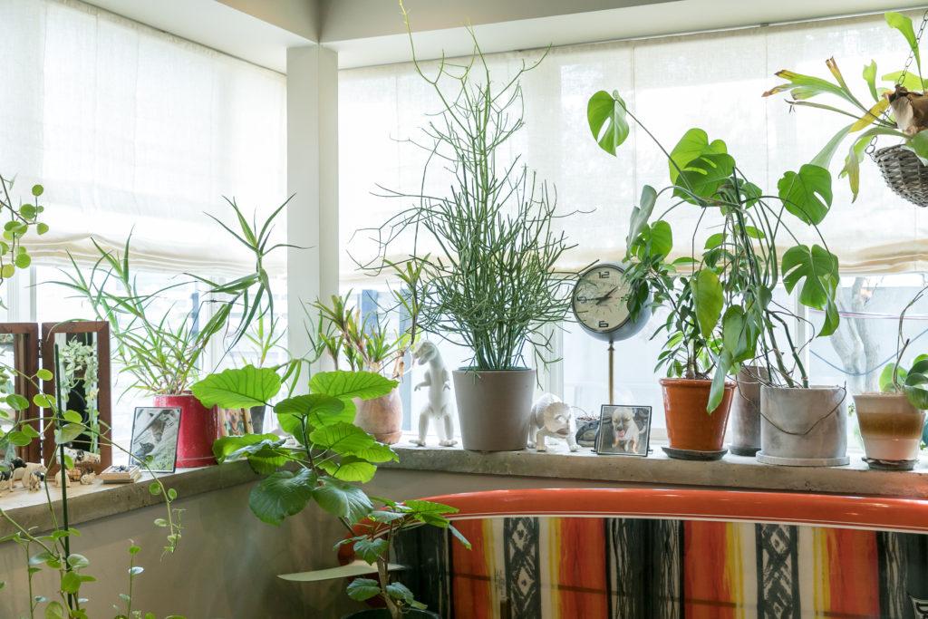 もともとあった出窓はモルタルで仕上げ直し、たくさんの植物を飾っている。