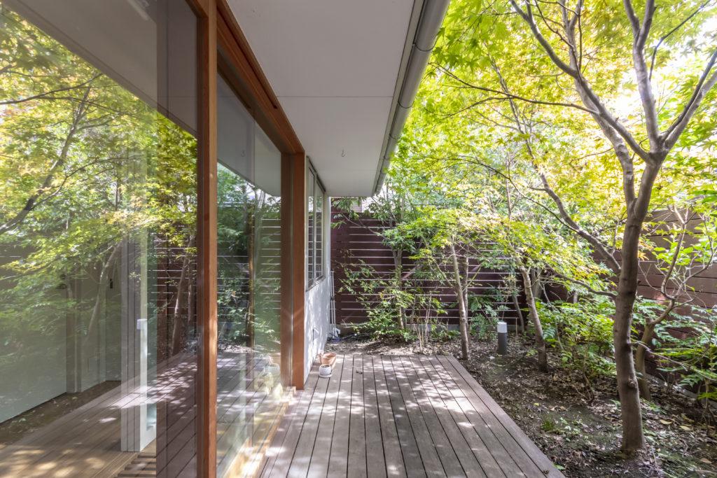 静かで落ち着いた空気感のある庭。この緑があるおかげでお隣の視線も気にならない。手前の木はオオサカズキ(モミジ)。