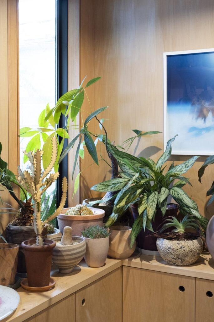 サボテンや多肉植物など、外の植栽からつながりを持たせてチョイス。