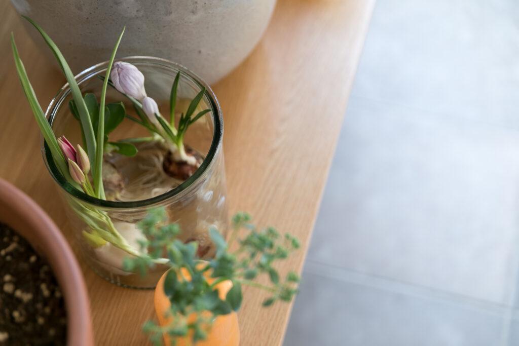 肉厚のガラスの器にラフに入れた球根。手前はヴィンテージの花器。