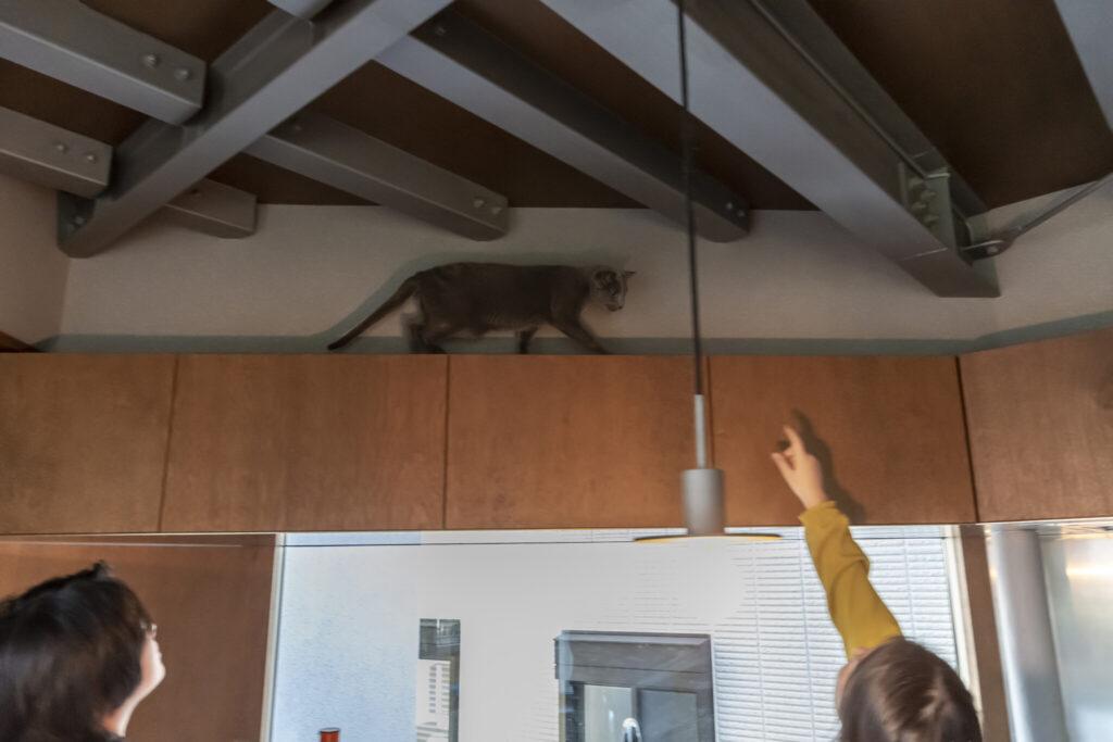 キッチンの棚と天井のあらわしの間を猫たちがスイスイ歩きまわる。