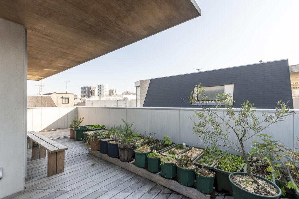 屋根庭の南側にぎっしりと並び置かれたグリーン。