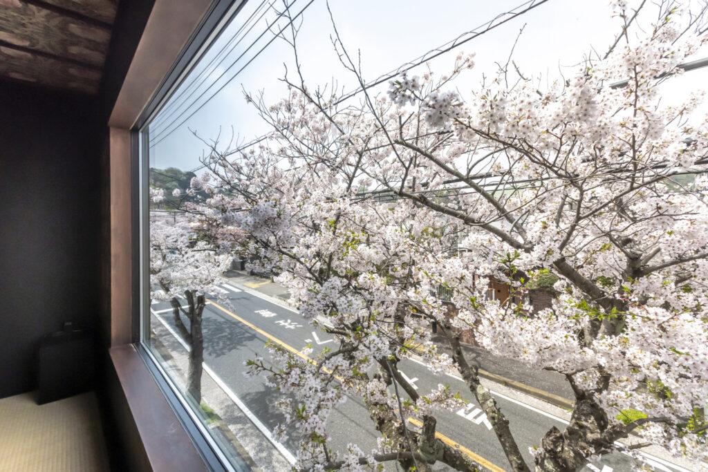 眼前に迫る満開の桜。枝にいる虫なども間近に見ることができ、息子さん(4歳)も大喜び。