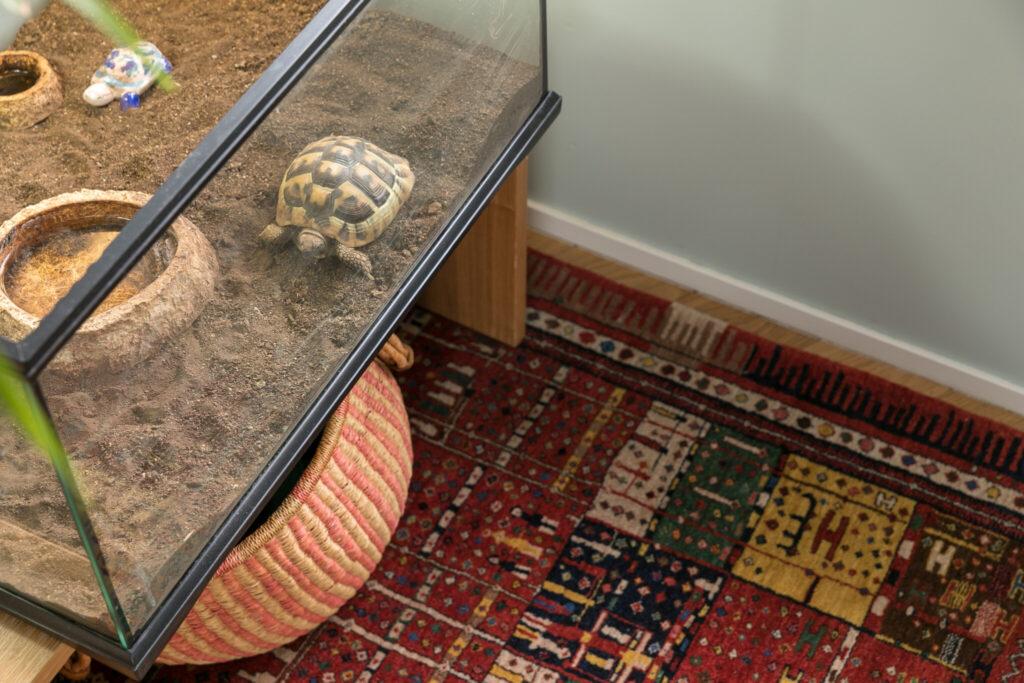 ヘルマンリクガメのカイちゃんのおうちの下にも絨毯を。