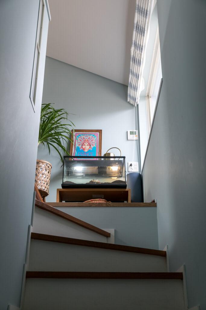 淡いブルーに塗った階段を上がった先に、リクガメの水槽がある。