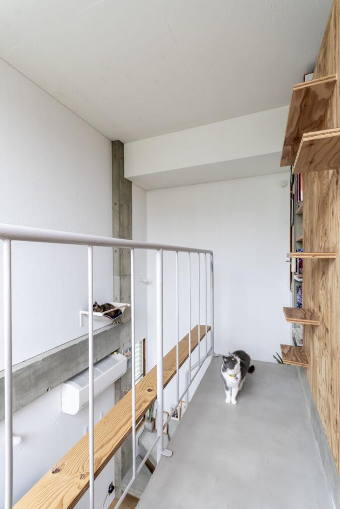 段状のキャットウォークを見上げるぽん。合板の張られた壁の向こう側は主寝室。