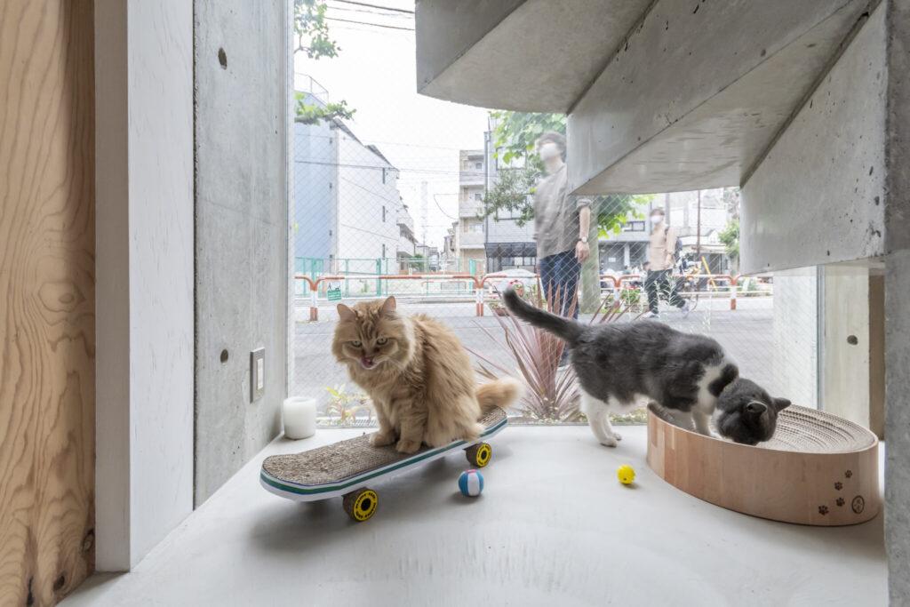 ネコが外を眺めるだけでなく、道行く人も外からネコたちを見て楽しんでいる。