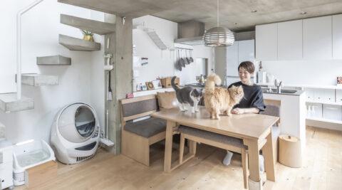 半減した敷地に建てた2世帯住宅 ネコと人間が心地よく暮らすための工夫をこらす