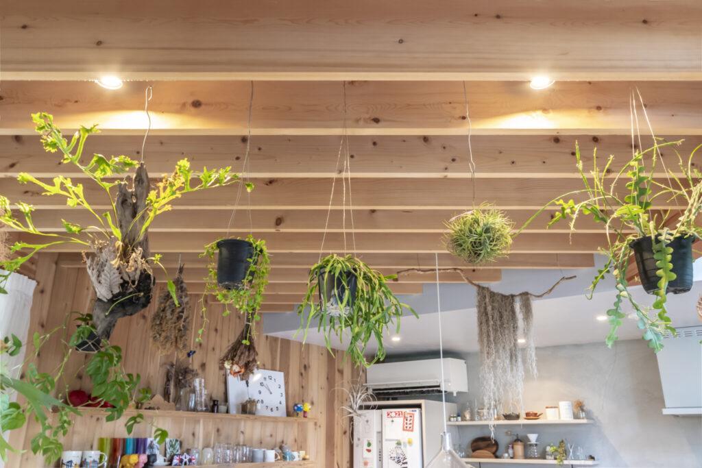 LDKの天井部分にも緑が吊るされている。