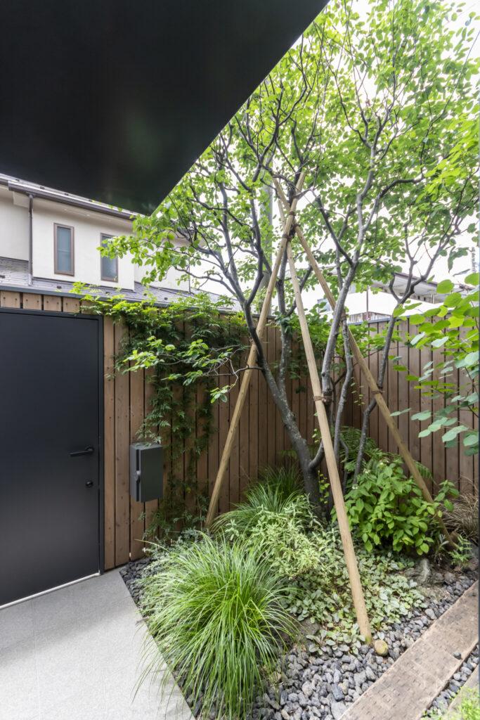 板塀の内側には、四季を意識できるジューンベリーの木を中心に考えられた前庭が広がる。