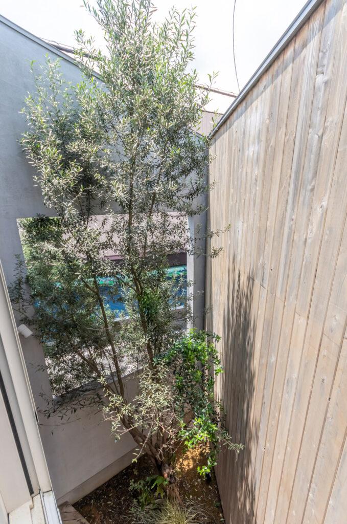 中庭にはオリーブが植えられている。その向こうの壁に開けられた開口も同じ2.4×2.4mの大きさ。