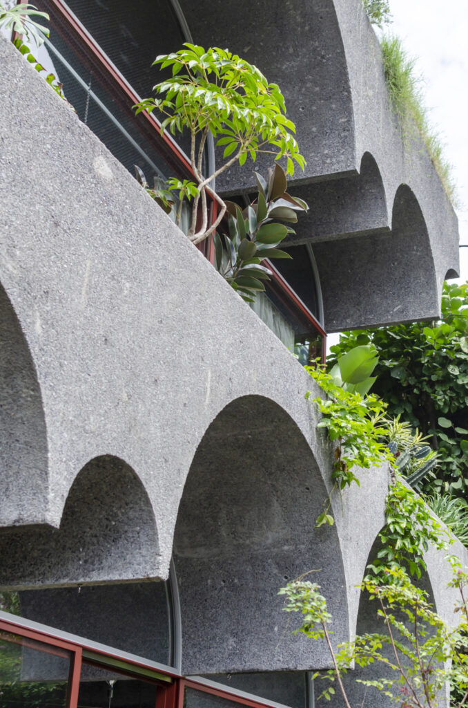 2階の四周につくられた庭でも植物が育っている。