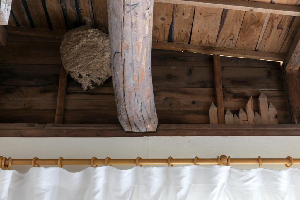 左は天井を開けたら出てきた蜂の巣! 「右の摩天楼のようにも見える木の杭は、土間を平らにする時に使った思い出の品です」